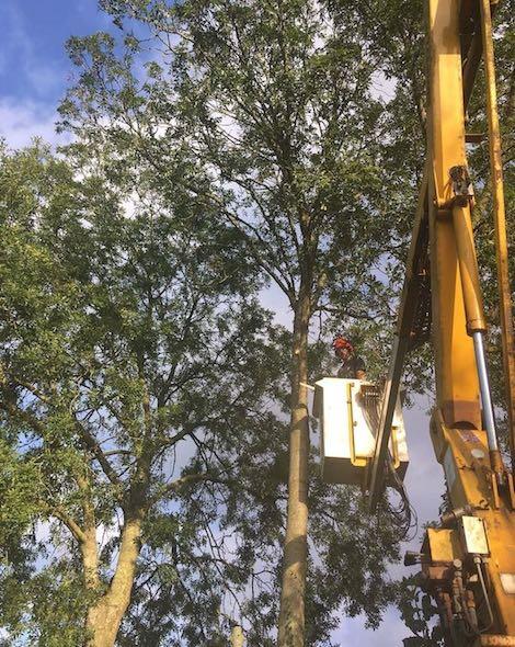 MEWPS in tree work
