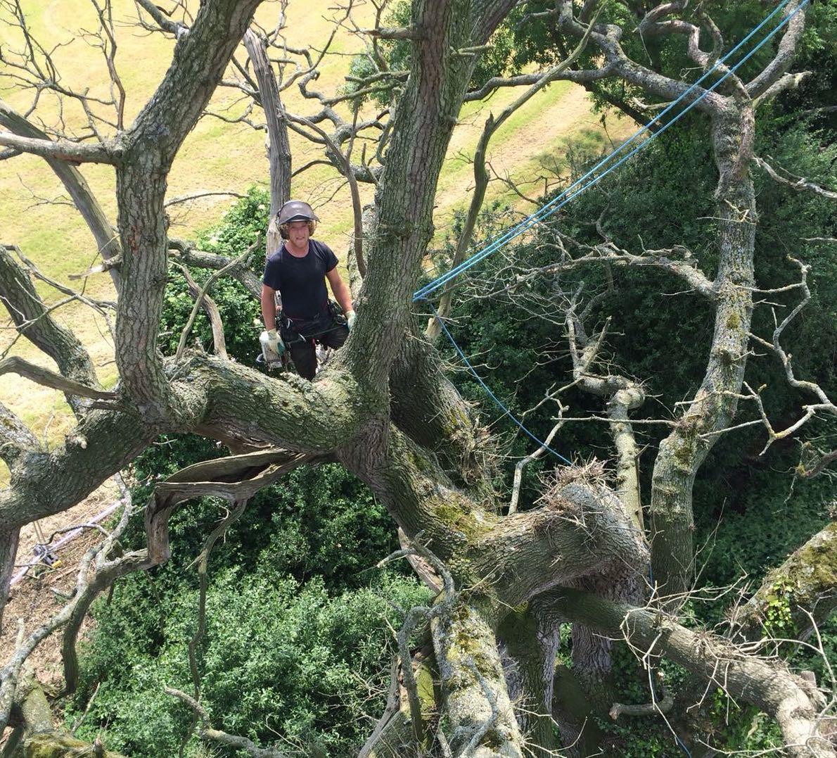 Silva Tree Surgeons lead climber