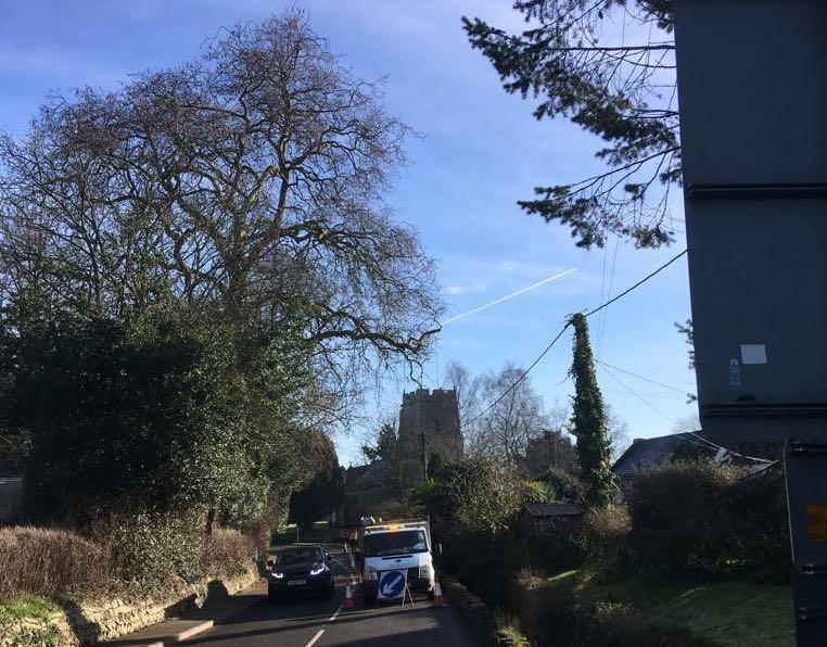 Tree surgery to London Plane Tree